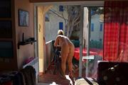 Nude housework 6
