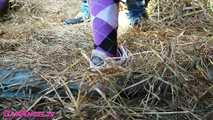Mein Stallknecht - Pinkeln, Ficken & Cumshot 6