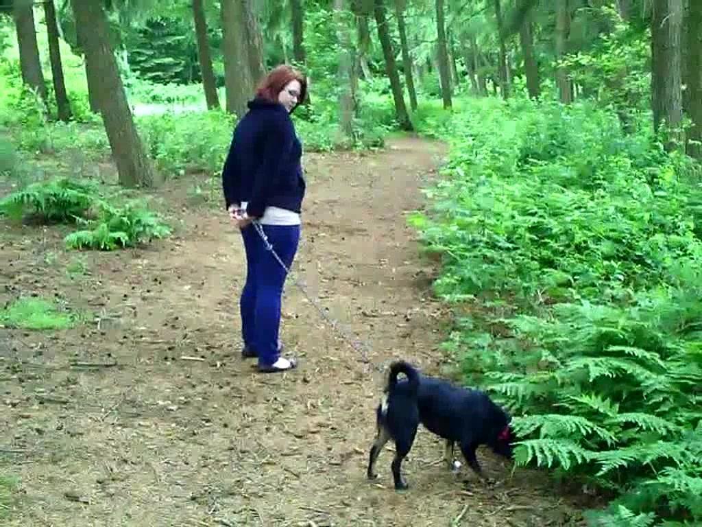 Buy Dog Walking Video