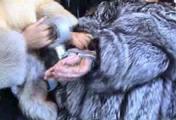 ab-143 Überfall im Pelzgeschäft (1) 8